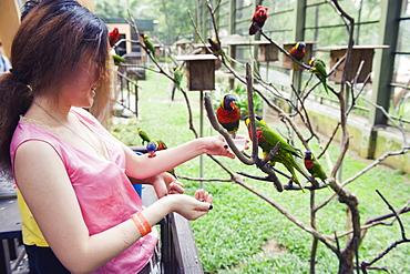Girl feeding parakeets in World of Parrots, KL Bird Park, Kuala Lumpur, Malaysia, Southeast Asia, Asia