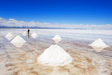 Man collecting salt, Salir de Uyuni, salt flats, Bolivia, South America