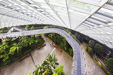 Canopy walkway, Gardens by the Bay, Cloud Forest,botanic garden, Singapore, Southeast Asia, Asia