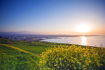 Coastal scenery and sunset, spring rapeseed blossom, Jeju Island, South Korea, Asia