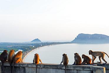 Macaque monkey (Macaca), Khao Chong Krajok, Prachuap Kiri Khan, Thailand, Southeast Asia, Asia