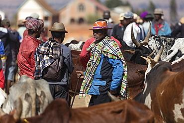 Zebu cattle market, Ambalavao, central Madagascar, Africa