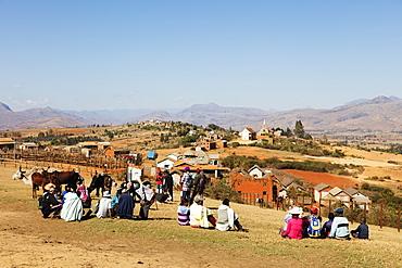 Zebu cattle market, Ambalavao, central area, Madagascar, Africa
