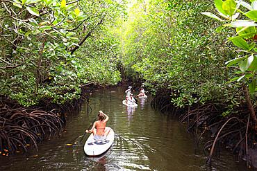 A girl on a stand up paddle board in mangrove swamp, Jozani Forest, Jozania Chwaka Bay National Park, Island of Zanzibar, Tanzania, East Africa, Africa