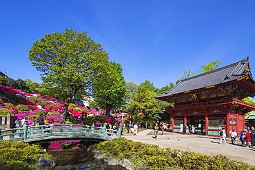 Azaleas, Nezu Shrine, Tokyo, Japan, Asia