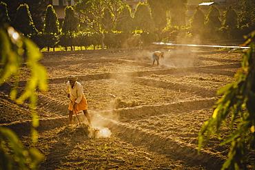 Gardener cleaning paddy fields in Swarg ashram, Rishikesh, Uttaranchal, India, Asia
