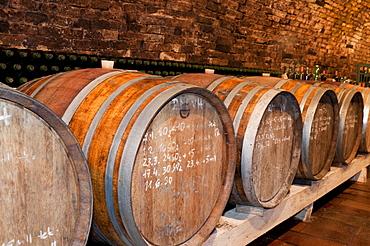 Wooden wine barrels and mould on walls of wine cellar of winemaker Petr Marada, village of Mikulcice, Brnensko, Czech Republic, Europe