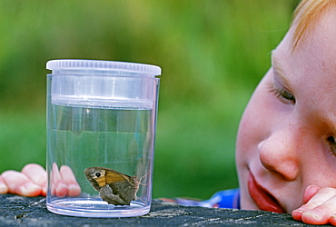 Young boy looking at butterfly, Kent, England, United Kingdom, Europe