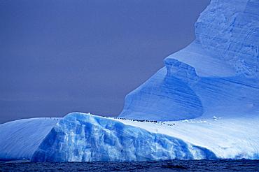 Chinstrap penguins on blue iceberg, Antarctica, Polar Regions