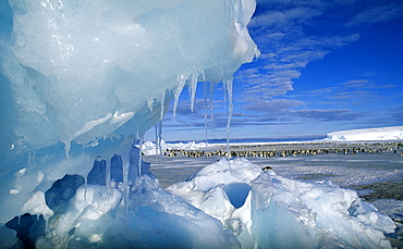 View through an icy pressure ridge of emperor penguin colony on Weddell Sea, Dawson Lambton Glacier, Antarctica, Polar Regions