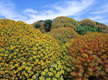 Bushes, Asinara, Sardinia, Italy, Europe
