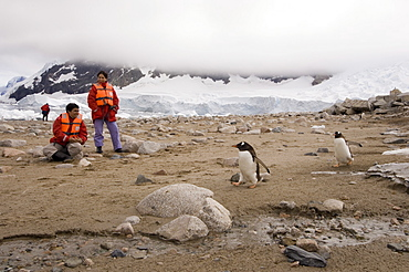 Tourists looking at gentoo penguins, Neko Harbor, Gerlache Strait, Antarctic Peninsula, Antarctica, Polar Regions