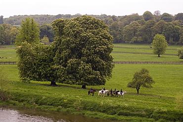 Mount Juliet Estate, Thomastown, County Kilkenny, Leinster, Republic of Ireland (Eire), Europe