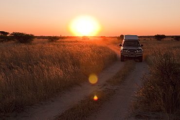 Deception Valley, Central Kalahari Game Reserve, Botswana, Africa