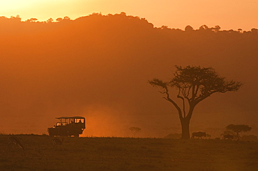 Masai Mara, Kenya, East Africa, Africa - 741-3604