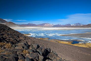Salar de Talar, Atacama Desert, Chile, South America