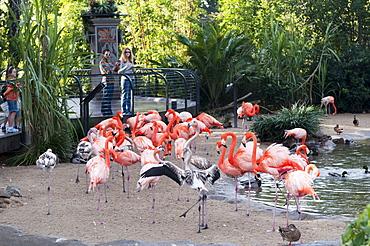 San Diego Zoo, Balboa Park, San Diego, California, United States of America, North America