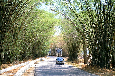 Bamboo avenue, St. Elizabeth, Jamaica, West Indies, Central America