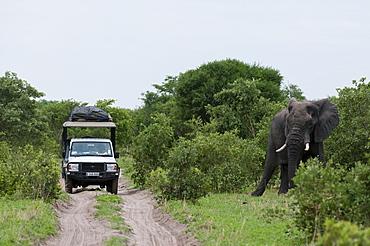 African elephant (Loxodonta africana), Khwai Concession Area, Okavango Delta, Botswana, Africa