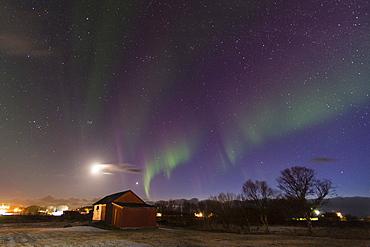 Northern Lights (aurora borealis), Laukvik, Nordland, Norway, Scandinavia, Europe