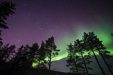 Northern lights (aurora borealis) over Lapland forest, Jukkasjarvi, Sweden, Scandinavia, Europe