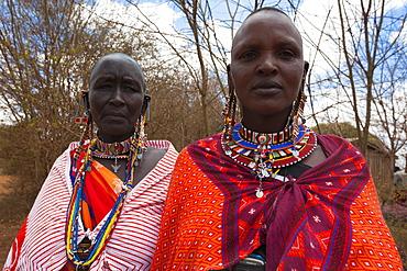 Maasai women at the Predator Compensation Fund Pay Day, Mbirikani Group Ranch, Amboseli-Tsavo eco-system, Kenya, East Africa, Africa