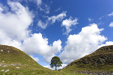 Sycamore gap, Hadrian's Wall, UNESCO World Heritage Site, Northumberland, England, United Kingdom, Europe