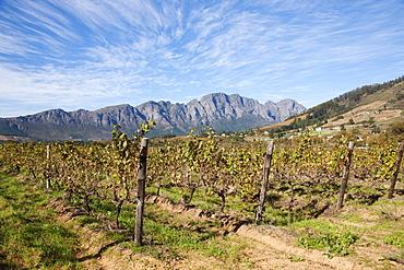 Franschoek, Cape winelands, Western Cape, South Africa, Africa