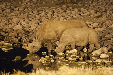 Black rhino (Diceros bicornis), cow and calf, drinking at night, Okaukuejo waterhole, Etosha National Park, Namibia, Africa