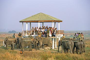 Tourists on elephant back safari, Kaziranga National Park, Assam state, India, Asia