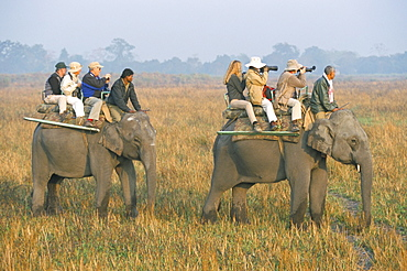 Safari on elephant back, tourists in Kaziranga National Park, Assam state, India, Asia