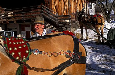 A peasant wedding, Preparation of the horses, Castelrotto, Trentino Alto Adige, Italy.