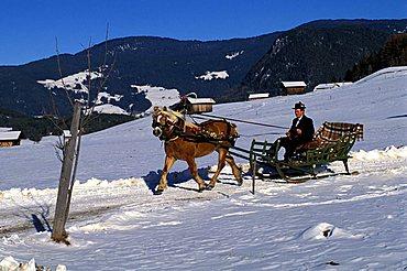 A sleigh towing by a horse, Castelrotto, Bolzano, Trentino Alto Adige, Italy.