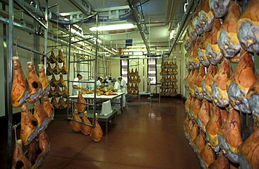 Preparation of ham, Prosciuttificio Unibon, Langhirano, Emilia Romagna, Italy