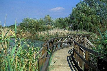 Natural reserve of the mouth of Stella river, Marano Lagunare, Friuli Venezia Giulia, Italy