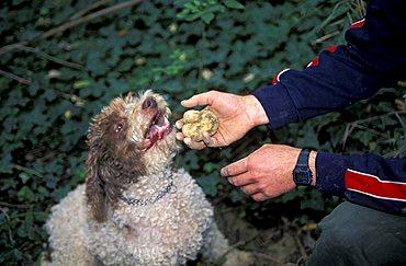 Truffle-hunting, Dovadola, Emilia Romagna, Italy