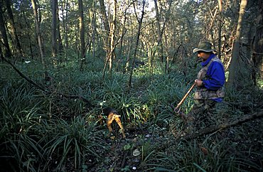 Truffle-hunting, Panfilia wood, Sant'Agostino, Emilia Romagna, Italy