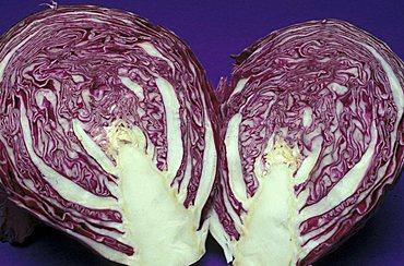 Brassica Oleracea, Cabbage, North Italy, Italy