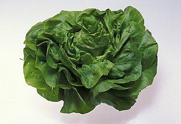 Lactuca, Lettuce, Italy