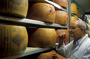 Parmigiano Reggiano, Guffanti cheese dealer, Arona, Piedmont, Italy.