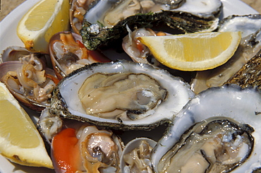 Oysters, L'Ostricaio Restaurant, Livorno, Tuscany, Italy