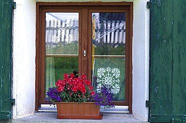 Flower pot with Lobelia and Antirrhinum on window