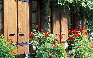 Window with pelargonium