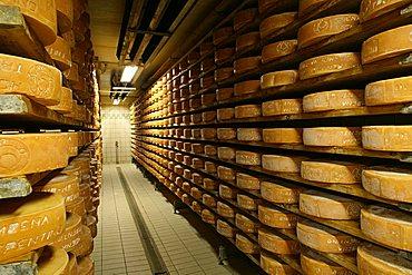 Puzzone cheese, Moena, Trentino Alto Adige, Italy