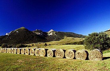 Sheafs, Bondone mountain, Trentino Alto Adige, Italy