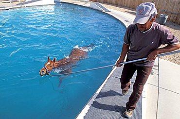 Swimming pool, Turf Paradise racecourse, Phoenix, Arizona, United States of America, North America