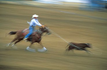 Steer roping, United States of America, North America