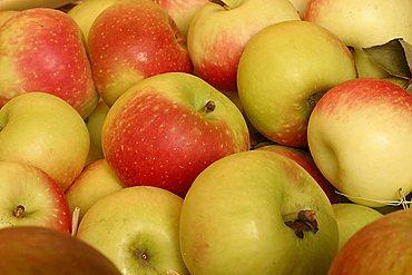 "Apples ""Francesca"", Italy"