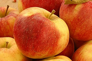"""Apples """"Mollie's Delicious"""", Italy"""