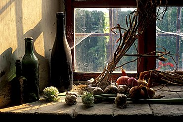 Garlic and onions, Monferrato, Piedmont, Italy.
